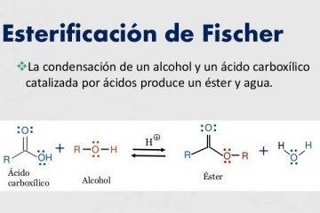 esterificacion de ácidos orgánica